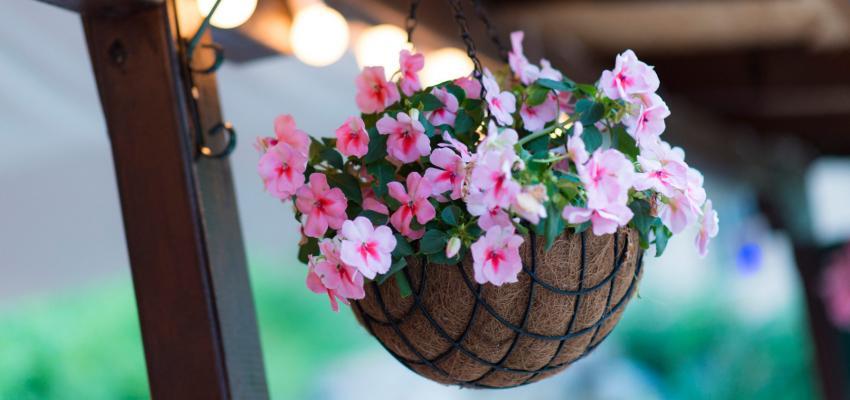 Rescue Remedy: a fórmula floral para situações de emergência