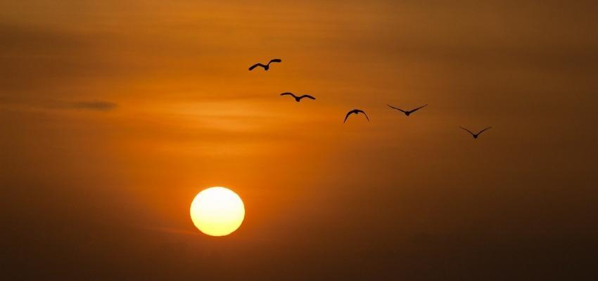 Salmo 22: palavras de angústia e libertação