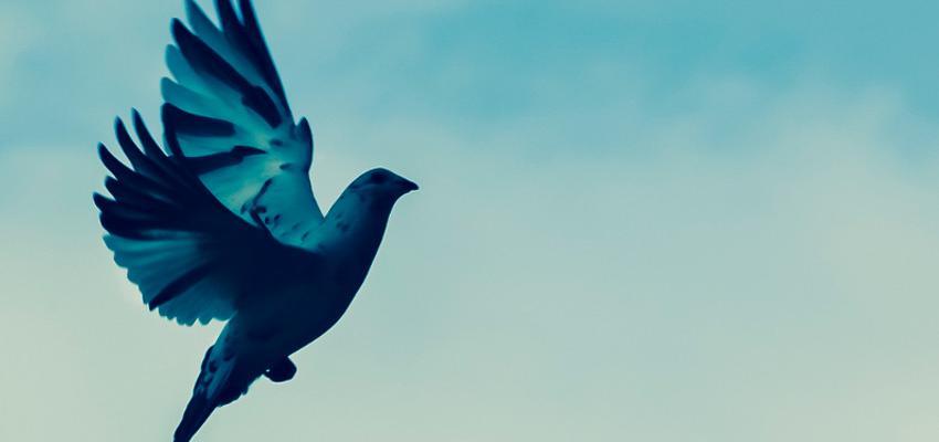 Como obter a justiça divina através do Salmo 82