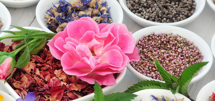 Óleo essencial de Sândalo – contra dores e insônia