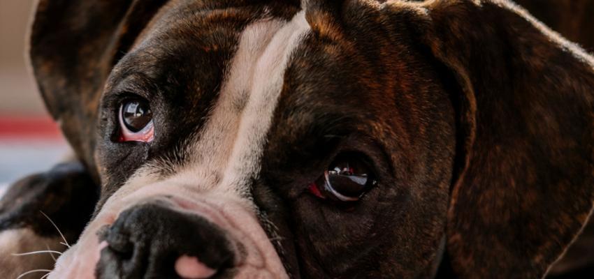 Os principais significados de sonhar com cachorro