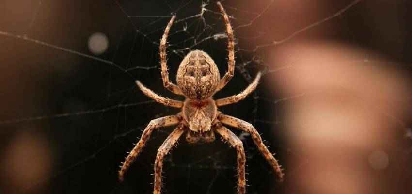 Sonhar com aranha: qual o significado?