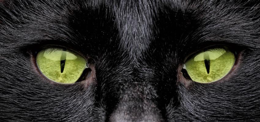 Superstição: gato preto, borboleta branca e preta, o que representam?