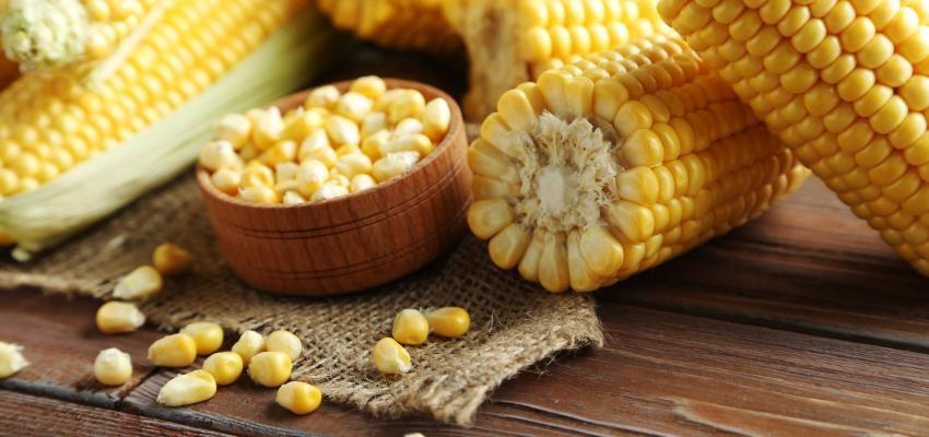 Simpatia do milho para ganhar dinheiro