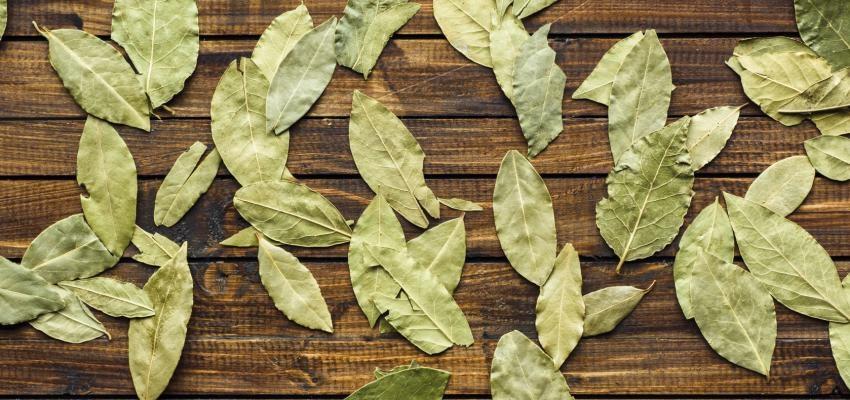 Técnica da bem-aventurança feita com folhas de louro: o que é e como utilizá-la?
