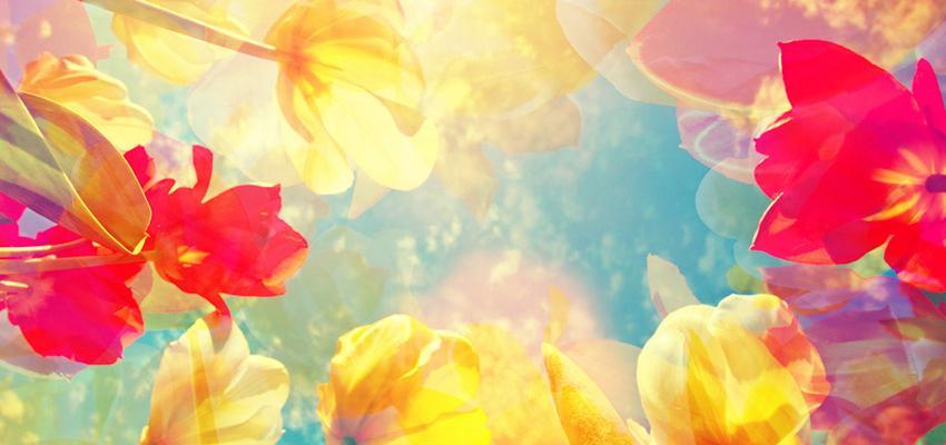 Tipos ideais de flores para cada lugar da casa