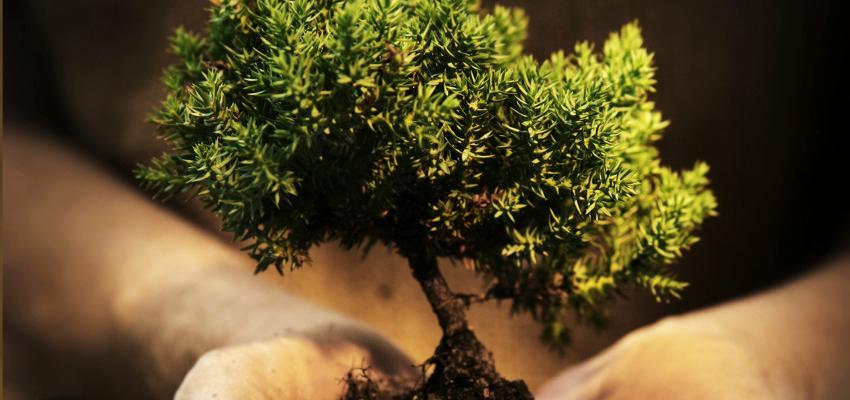 Como tratar um bonsai para que sobreviva