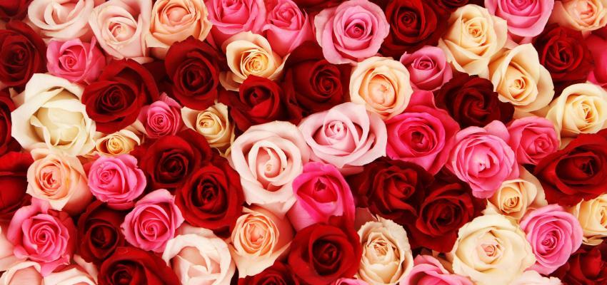 Umbanda – veja o significado das cores das rosas nos rituais