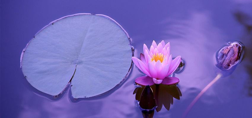 Use a Terapia de Vidas Passadas para sua cura espiritual