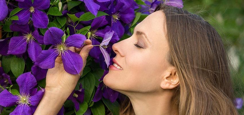 Water Violet — o floral dos sábios que apreciam a solidão