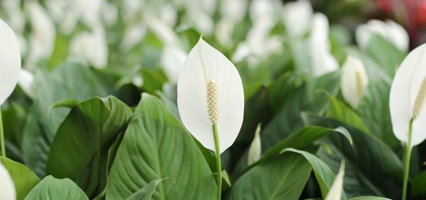 As plantas e sua capacidade de espantar más energias