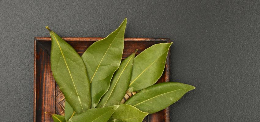 Ervas que curam: como fazer benzimento com louro