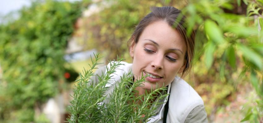 Respirar alecrim: o que é e como utilizar