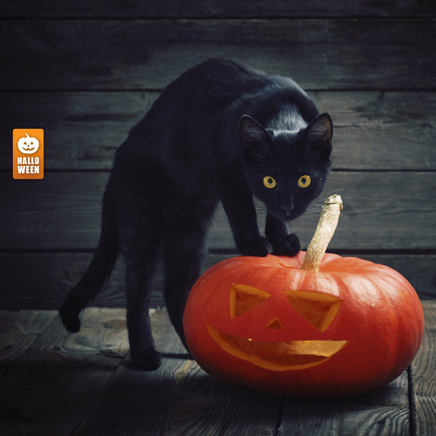 c58dcb6e1 Simpatia do Gato Preto no Halloween