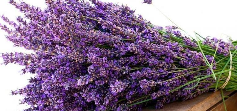 ervas sagradas para defumação