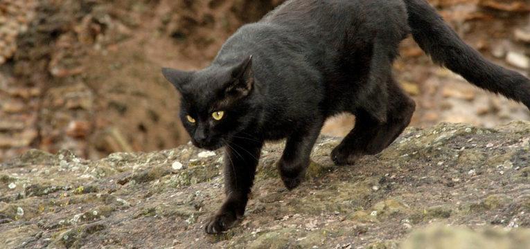 superstições brasileiras - gato preto