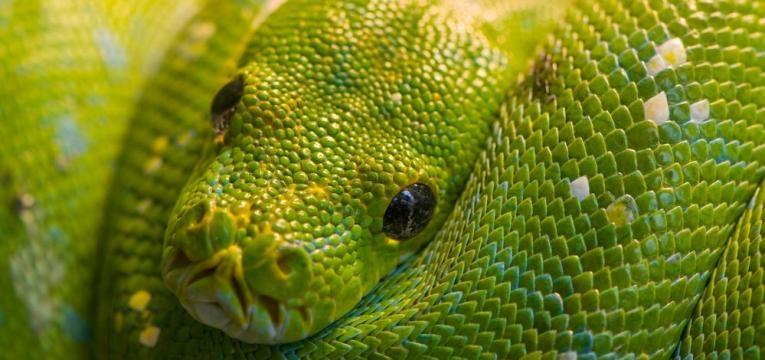 sonhar com cobra verde