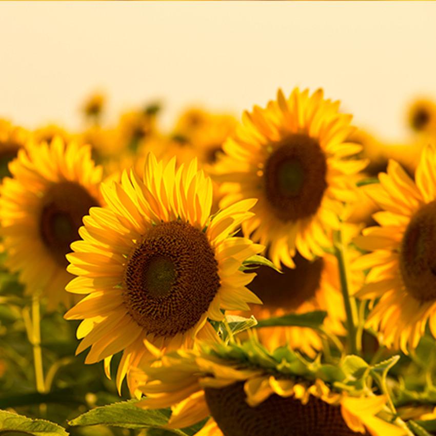 Significado das cores – Amarelo