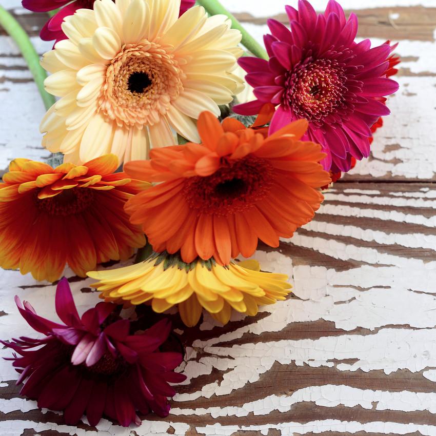 horóscopo das flores - Áries