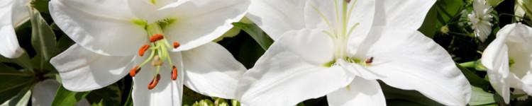 Aromaterapia Flor