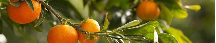 Óleos essenciais tangerina