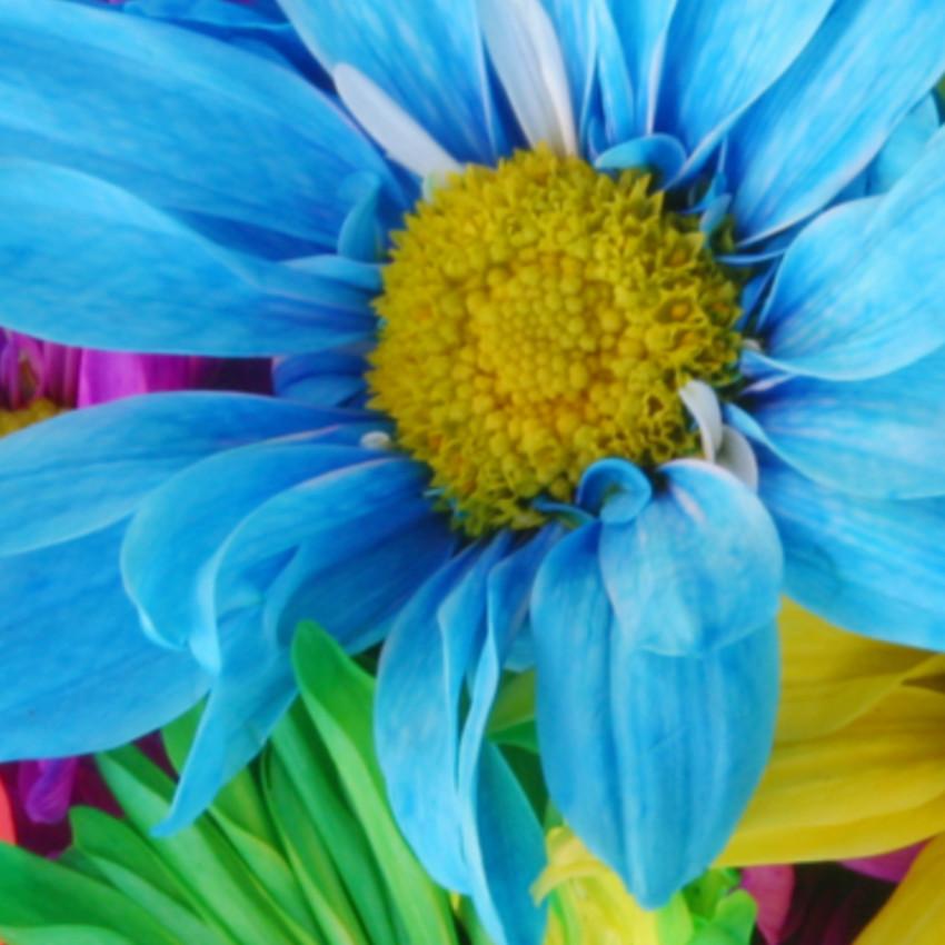 Significado das cores – Azul
