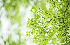 Terapia floral para tratar tristeza: Elm