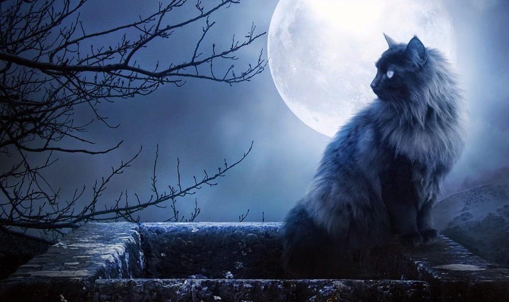gatos e espiritualidade