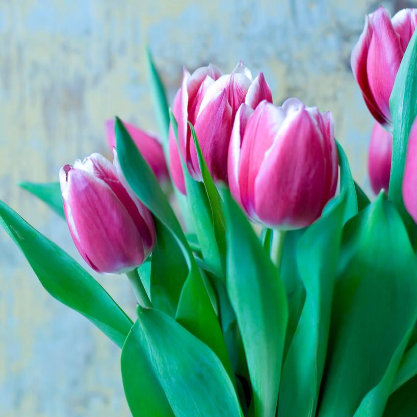 Horoscope des fleurs GÉMEAUX