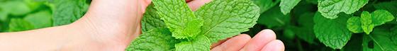 Limpeza Aromaterapia 5