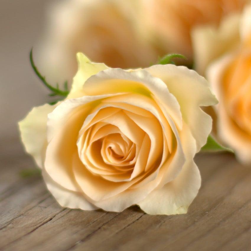 Simpatia com Rosas