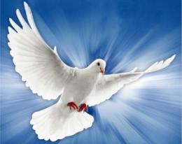 Símbolos do Espírito Santo - Pomba