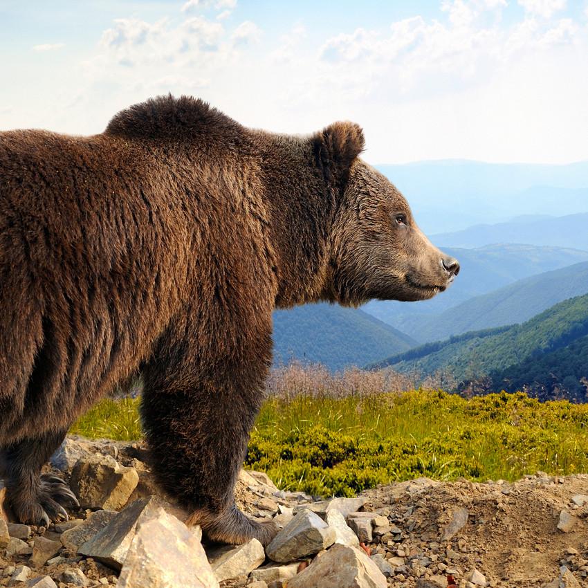 Urso (nascidos entre o dia 21 de abril e 20 de maio)